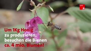 Miniaturansicht - 5 Fakten über Bienen