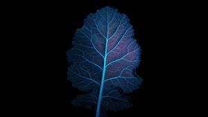Vorschaubild - Fachberereichsleben Biologie - Science Picture Award