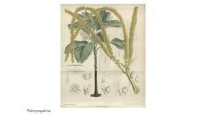 Thumbnail - Arbeiten, Forschen, Lehren im Fachbereich Biologie - Was erforscht die Holzbiologie?