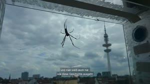 Thumbnail - Forschung am Fachbereich Biologie - Das Spinnen-Labor