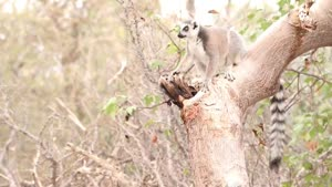 Thumbnail - Madagaskar: Globaler Hotspot der Biodiversität