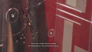 """Thumbnail - Prof. Dr. Jutta Schneider bei Wissen vom Fass: """"Todesopfer beim Spinnensex"""""""
