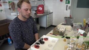 Thumbnail - Forschung am Fachbereich Biologie - Komplexe Käfer (Teil 2/2)