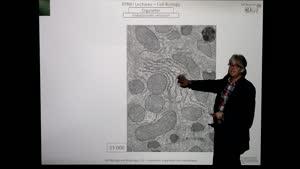 Thumbnail - Modul-EPNEI-Vorlesung-Zellbiologie-Teil-2.2-Folienerklärung02