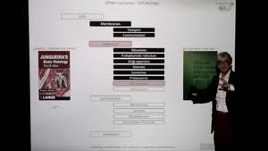 Thumbnail - Modul-EPNEI-Vorlesung-Zellbiologie-Teil-3.2-Folienerklärung01