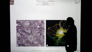 Thumbnail - Modul-EPNEI-Vorlesung-Zellbiologie-Teil-3.2-Folienerklärung04
