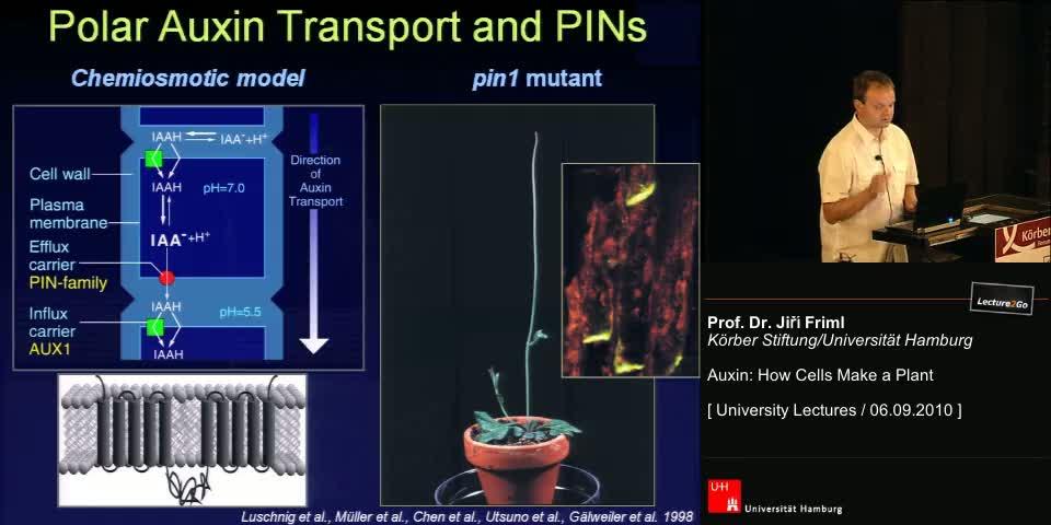 Thumbnail - Polar Auxin Transport and PINs