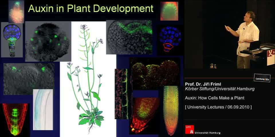 Thumbnail - Auxin in Plant Development