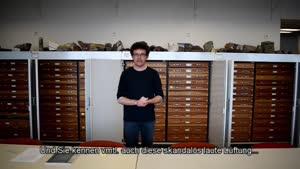 Thumbnail - Einführung in die Stratigrafische Sammlung